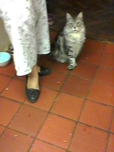 cat deportment